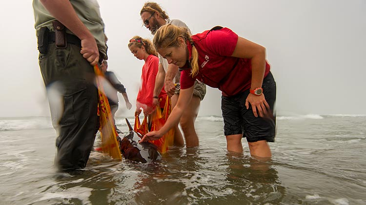 Team rescuing stranded whale