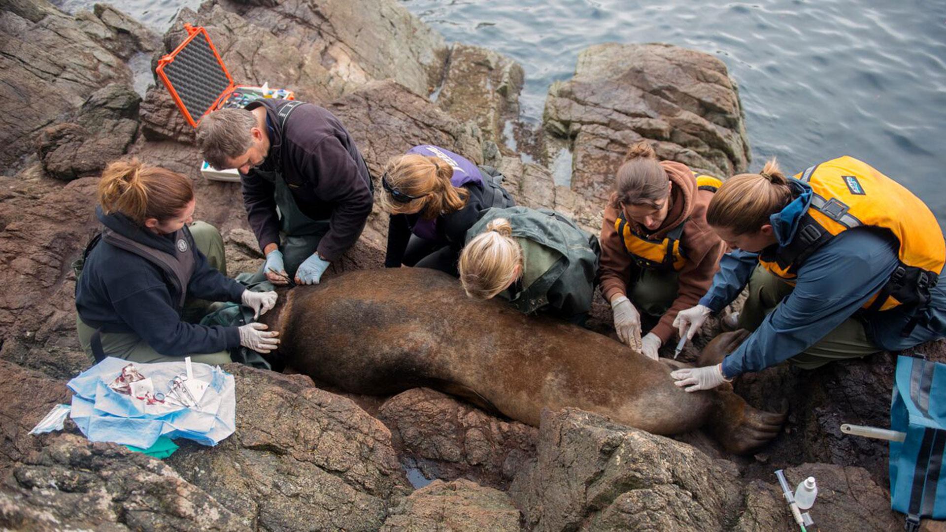 seals rescue