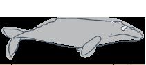 icon-patterns-grey