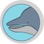 icon-teeth-dolphin